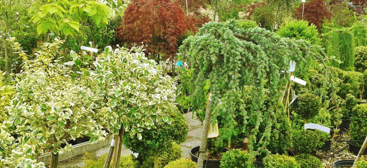 Επιλογή φυτών